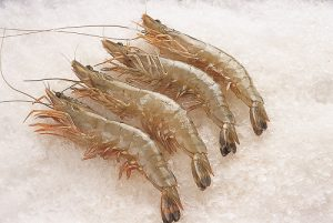 Attention pour le commerce d'importation de crevettes