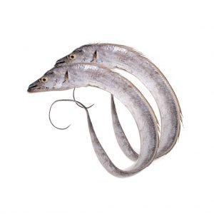 Ribbonfish