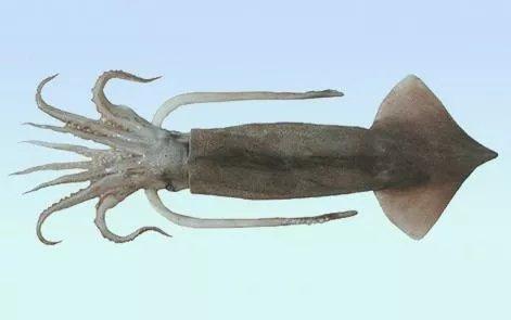 Squid introduction