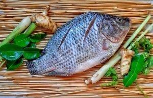 Is Chinese tilapia healthy to eat? Ocean Treasure