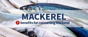 Mackerel, why is it so important for family consumption