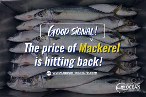 Good Signal! The price of Mackerel is hitting back!
