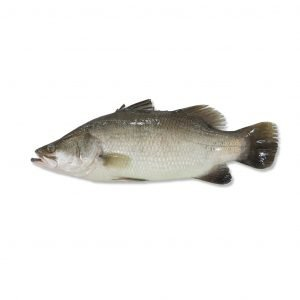 The World Premium Farmed Fish -Barramundi and Seabass